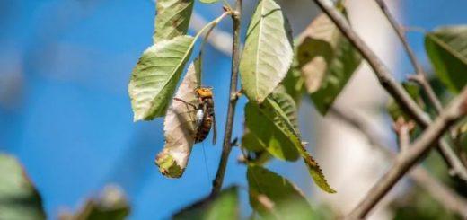 美国人全副武装去摧毁杀人蜂巢穴,结果还差点儿让蜂后给跑了...