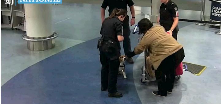 刺激! 华人大妈丝袜缠身闯机场 海关追捕下 她一个箭步冲进了男厕所…